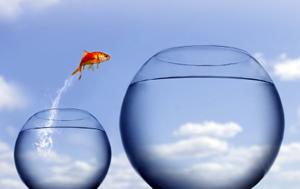 goldfishjumping